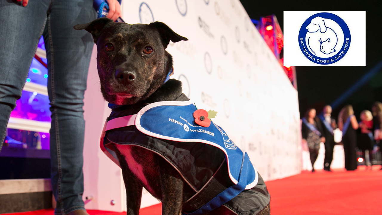 Battersea Dogs & Cats Home - Collars and Coats photo